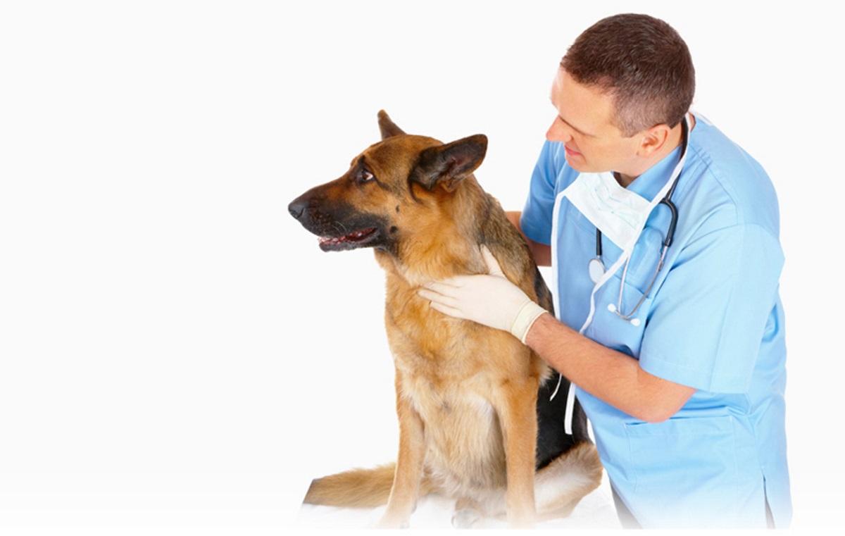 Косым, картинки к дню ветеринарии